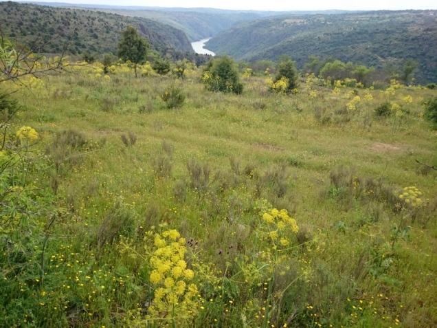 Flora Zamora. La diversidad de hábitats hace posible que existan más de 2.100 especies de plantas (12)